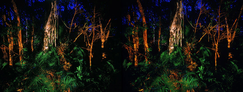 3D light-painted photograph of Grandfather Cypress Tree, Fakahatchee Strand, Florida