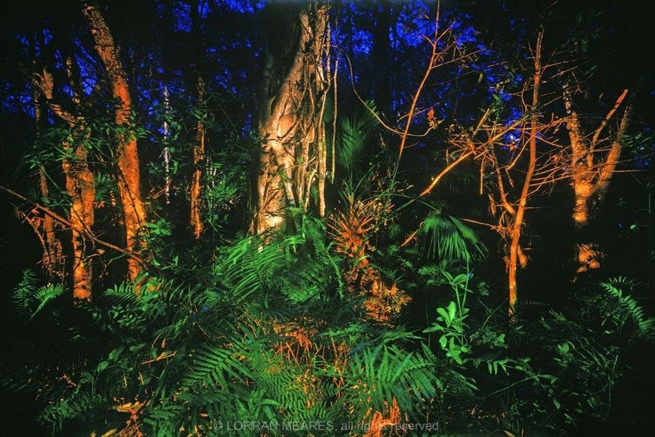 Cypress, Fakahatchee Strand, Florida
